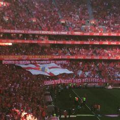 Tudo dito. Resta fazerem aquilo que melhor sabem! Vamos Benfica !!! #Slb #slbenfica #benfica #dr4 #diogorafael4