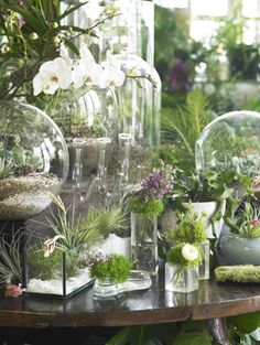glass encased beauties
