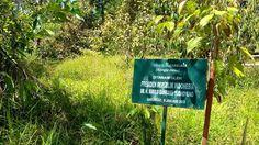 Cerita dari Hutan Adopsi Sarongge   Mongabay.co.id