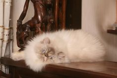 Gdy kot zostaje pod czyjąś opieką