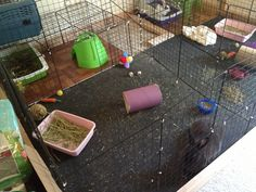 Build your own bunny cage! I was tired and broke from continuously buying bunny cages and having either my bunny out grow the cages or biting the plastic bottom until it wouldn't hold anymore! This cage you can continuously grow with your bunny and it's more then half of the price then buying a cage from the pet store! You can also add on a play pen, which you can build yourself too!