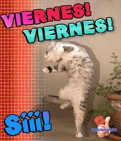 Buenos Dias  http://enviarpostales.net/imagenes/buenos-dias-1626/ #buenos #dias #saludos #mensajes
