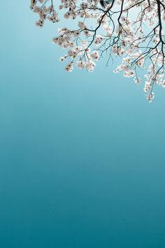blue & white. *** La mia idea di primavera: cielo azzurro e fiori :)