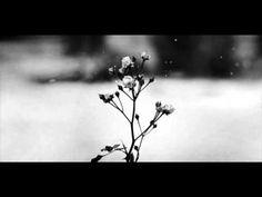 Chopin - Spring Waltz (Mariage d'Amour) [Please Read Description] -- Piano MUSIC Пианино เปียโน Klavier 피아노 piyano ピアノ 钢琴 pianoforte πιάνο بيانو Elf Rogue, Paolo Conte, Winter Rose, Winter Flowers, Winter Colors, Winter Snow, Piano Cover, Romance, Pop Rock
