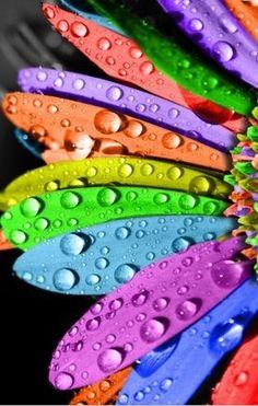 Flower colors...