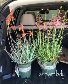 Beautiful, #waterwise plants ready for spring! Thank you @monroviaplants #LetsGarden!