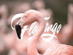 Flamingo_ by Jonathan Ortiz Highlands Ranch, Saint Charles, San Luis Obispo, Flamingo, Design, Marina Del Rey, Flamingo Bird, Flamenco