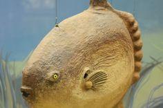 #Travel #tour #Darwin Museum (136)