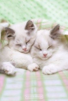 Fur babies ~