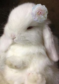 Adorable White Bunny...just one of the many reminders that Spring is Here!: