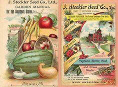 Steckler 1899