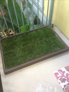 1000 Images About Dog Potty Grass On Pinterest Doggies