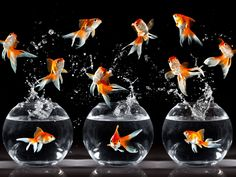 House beauty can easily be enhance by an Aquarium find the nearest #Aquarium service provider at #Qlook http://qlook.bz