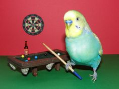 Budgies Playing Pool