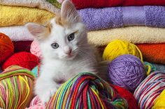 kittens with yarn