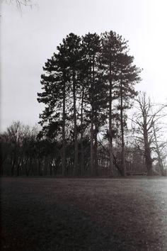 kaštieľ Malinovo - park camera: Zeiss Ikon