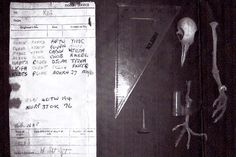 The remains of a carrier pigeon with a coded message from World War II was found in a chimney in a home in Surrey, England, in 1982. So far code-breakers have been unable to crack the code.