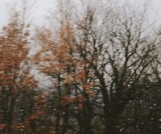 Narnia, Feeds Instagram, Autumn Cozy, Late Autumn, Autumn Aesthetic, Best Seasons, We Fall In Love, Hello Autumn, Photos Du