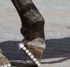 I would totally do this to my horse