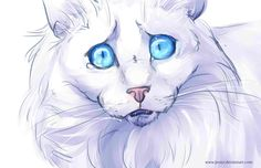 i beleave that cloudtail would have made a good leader of thunderclan if he had beleaved in starclan. ivypool, sorreltail, brightheart,cinderheart, and hollyleaf, would have all made decent leaders