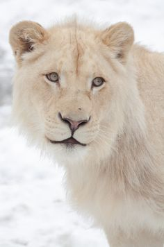 Stunning WILDLIFE to Protect on Pinterest   Endangered ... - photo#28