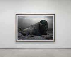 Simen Johan....portrait of a buffalo. I think he looks beautiful, so majestic <3
