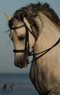 This is final, I finally choose the dream horse I really really REALLY want! It is this one!!!!!!!!! *hint*hint*