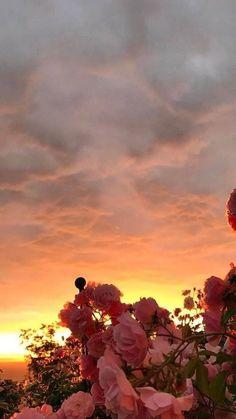 flower wallpaper Rose - - Celia Na. Iphone Background Wallpaper, Tumblr Wallpaper, Aesthetic Iphone Wallpaper, Flower Wallpaper, Nature Wallpaper, Aesthetic Wallpapers, Wallpaper Quotes, Black Wallpaper, Walpaper Iphone