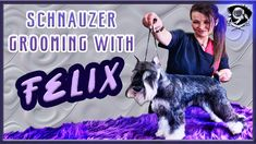 Schnauzer Grooming Guide: Step-By-Step Rear Assembly Walkthough with FELIX! Schnauzer Grooming, Poodle Grooming, Black Labs, Black Labrador, Equine Photography, Animal Photography, Yorkie Dogs, Corgi Puppies, Dog Grooming Business
