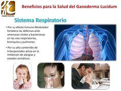 Beneficios del Ganoderma Lucidum en la Salud Ayurveda, Health, Fitness, Respiratory System, I Love Coffee, Allergies, Sports, Style, Health Care
