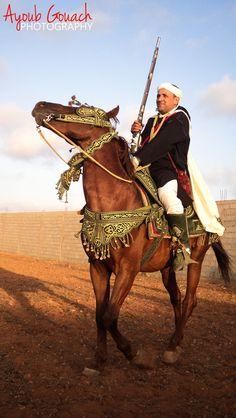 Arabian Horse c