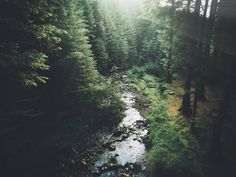 In the forest by Daniel Casson on 500px
