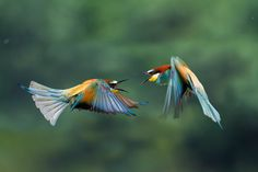 Two rainbows meet in flight