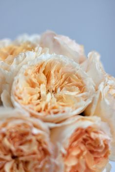 Wedding Wednesday : Flowerona's Guide to David Austin Roses | Flowerona