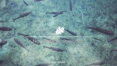 ALERTA: Nos quedamos sin pescado
