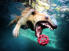Dogs Underwater by Seth Casteel