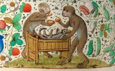 Monkeys nursing a kitten (see also the eternal love of the primates) 'Trivulzio Book of Hours', Flanders ca. 1470.   Den Haag, Koninklijke Bibliotheek, SMC 1, fol. 110v