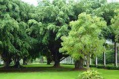 Bilderesultat for urban forest