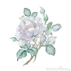 Hand drawn watercolor floral branch isolated on white background. White rose. Great for creating vintage designs