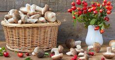 I funghi sono un alimento delizioso ma anche un valido nostro alleato, ricco di proprietà nutritive da non sottovalutare.