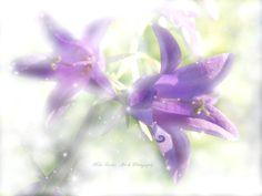 bellflower in summer light - null Art Photography, Fine Art, Flowers, Plants, Summer, Fine Art Photography, Summer Time, Plant, Visual Arts