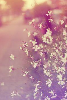 it's just some flowers by strumpbyxor on DeviantArt Cute Wallpaper For Phone, Kawaii Wallpaper, Cute Wallpaper Backgrounds, Cellphone Wallpaper, Flower Wallpaper, Cool Wallpaper, Cute Wallpapers, Lovely Girl Image, Samsung Galaxy Wallpaper