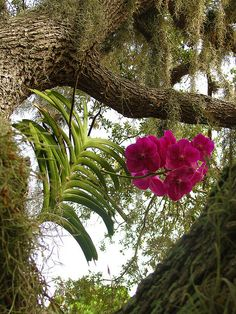Orchid by Sara Tully, via Flickr