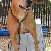 Adopt A Pet :: JENESIS - Philadelphia, PA