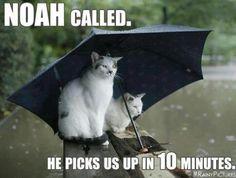 75 Best Rainy Days Images Rain Days Rainy Days Funny Phrases