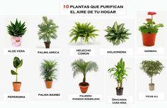Echamos un vistazo a las mejores plantas para la cocina, lo más importante es que aguanten los cambios bruscos de temperatura.