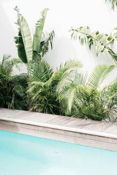 Villa Palmier - tropical pool and garden set on the sea in St. Photo: Kate Holstein Villa Palmier - tropical pool and garden set on the sea in St. Landscape Design, Garden Design, Jardin Luxuriant, Villa, Tropical Decor, Tropical Garden, Tropical Plants, Beach House Decor, Pool Designs
