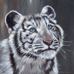 White Tiger Cub Big Cat Animal SFA  Original hand painted acrylic wildlife painting by Australian Artist Janet M Graham