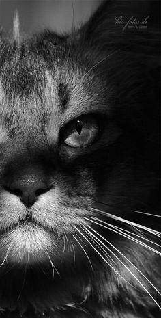 Cats W & B close-up (hva)