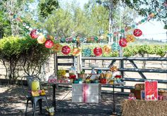 horse ride & petting zoo bday party